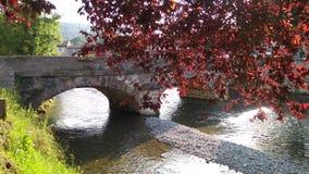 Red autumn tree overhangs an old stone bridge stock photo