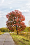 Red autumn tree and a road of plates Royalty Free Stock Images