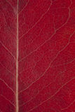 Red autumnal leaf background Royalty Free Stock Photography