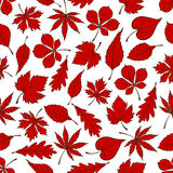 Red autumnal leaves seamless pattern background Stock Photography