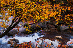 Red autumnal leaves and stream Royalty Free Stock Image