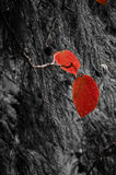 Red autumnal leaves Stock Image