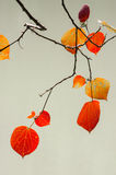 Red autumnal leaves Stock Images