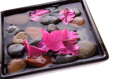 Red azalea and pebbles Stock Photography