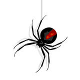 Red back spider. Royalty Free Stock Images
