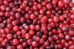 Red background of the frozen cranberries. Bright red background of the frozen cranberries Stock Photo