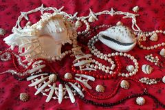 Red background-jewerly. Magnificent background with sea cockleshells and pearls Royalty Free Stock Photo