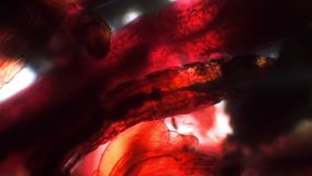 Red background of live worm bodies under a microscope