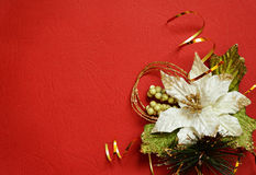 Red background with white pionsettia in a corner Stock Photos