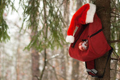 Red backpack hanging on the tree, Royalty Free Stock Photography