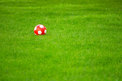 Red ball. On green grass Royalty Free Stock Photography