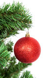 Red ball on the branch of a Christmas tree on white background Royalty Free Stock Photos