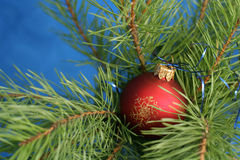 A red ball on a Christmas tree Stock Photos