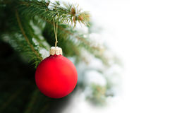 Red Ball on a Christmas Tree. Red Bauble Hanging on a Christmas Tree Stock Photos