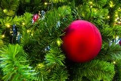 Red ball on a Christmas tree. Stock Image