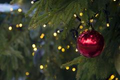 Red ball on a christmas tree Royalty Free Stock Photos