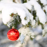 Red Ball on Christmas tree branch, covered with Snow. Outside. Stock Photography