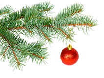 Red ball on the Christmas tree Royalty Free Stock Images