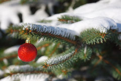 Red ball on the Christmas tree Royalty Free Stock Image