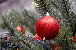 Red ball. Christmas tree toy. Royalty Free Stock Image