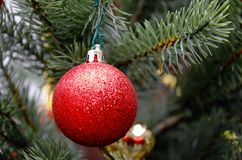 Red ball. Christmas tree toy. Stock Images