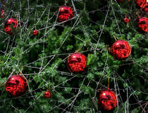 Red ball decoration christmas tree Royalty Free Stock Photography