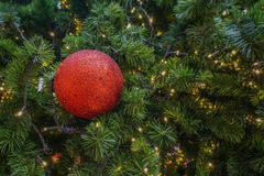 Red ball decoration on christmas tree Royalty Free Stock Photo