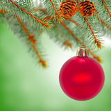 Red ball on fir branch Stock Photography