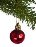 Red ball on fir tree branch Stock Photos