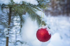Red ball on a fir-tree branch in the snow-covered wood. Royalty Free Stock Photography