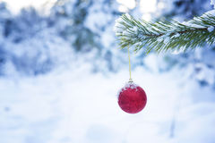 Red ball on a fir-tree branch in the snow-covered wood. Stock Photography