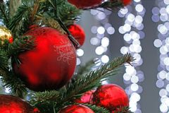 Red ball hanging on the branch of Christmas tree on the background of blue li royalty free stock photo