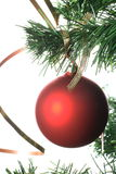 Red ball hanging from christmas tree Royalty Free Stock Photography