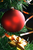 Red ball hanging from christmas tree.  Stock Image