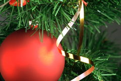 Red ball hanging from christmas tree.  Stock Photo