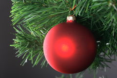 Red ball hanging from christmas tree Stock Photography