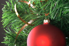 Red ball hanging from christmas tree.  Royalty Free Stock Images
