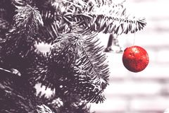 Red ball hanging in the crismas tree Stock Images