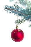 Red ball hanging on fir tree Stock Image