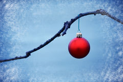 Red ball ornament on a branch in a blue background Stock Photo