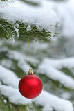 Red ball on snowy pine branch Royalty Free Stock Image