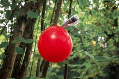 Red balloon with note attached to it as part of a scavenger hunt or paper trail game hanging on tree