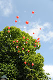 Red Balloons with congratulation cards Stock Image