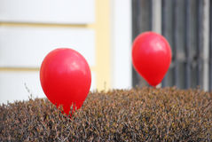 Red balloons, inflated with helium, decorate the bushes in the courtyard of the church Royalty Free Stock Images