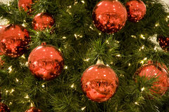 Red balls on Christmas tree Royalty Free Stock Images