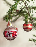 Red balls on Christmas tree branch Stock Images