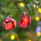 Red balls on fir christmas tree branch close up royalty free stock photo