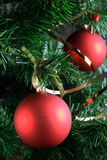 Red balls hanging from christmas tree.  Royalty Free Stock Image