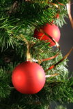 Red balls hanging from christmas tree.  Stock Photos