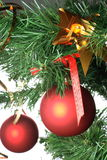 Red balls hanging from christmas tree Royalty Free Stock Photos